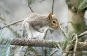 Barclays' postmodern squirrel
